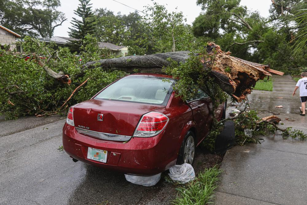 tree on car for article murphys law for cars